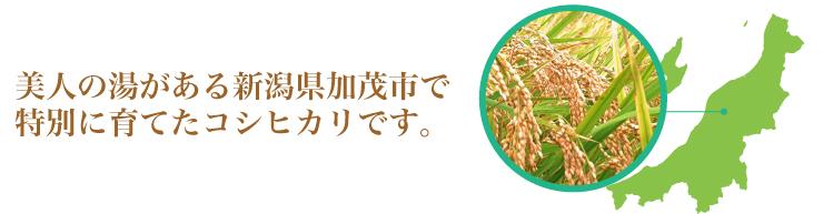 新潟県加茂市で栽培しています